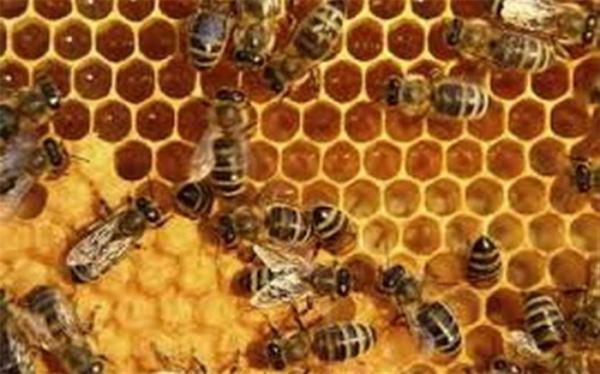 پیشنهاد اختصاص 5850 میلیارد تومان اعتبار به صنعت زنبورداری