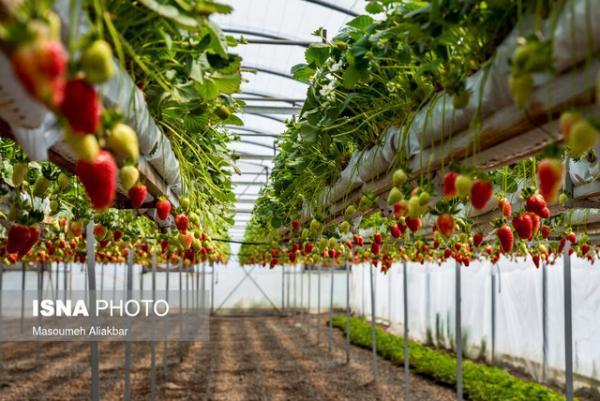 حدود 37 هکتار گلخانه در کهگیلویه و بویراحمد وجود دارد